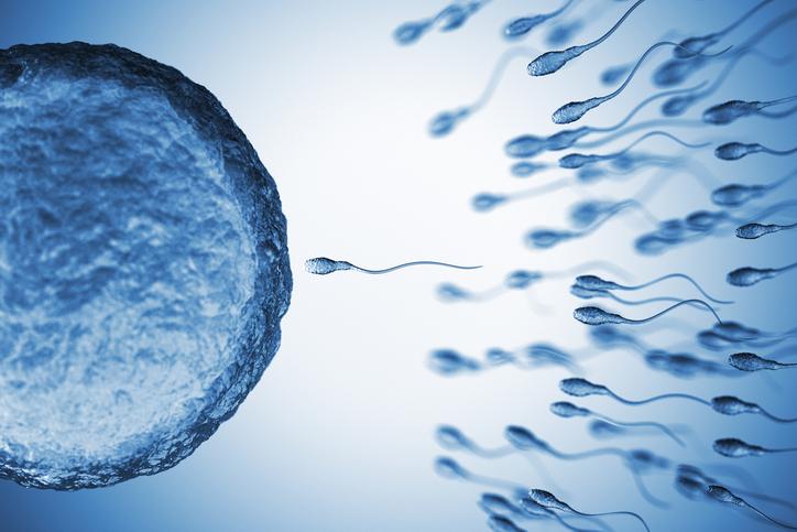 k9 fertility clinic Insemination