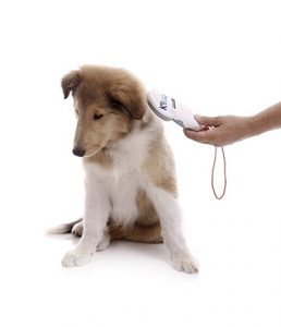 k9 microchipping service